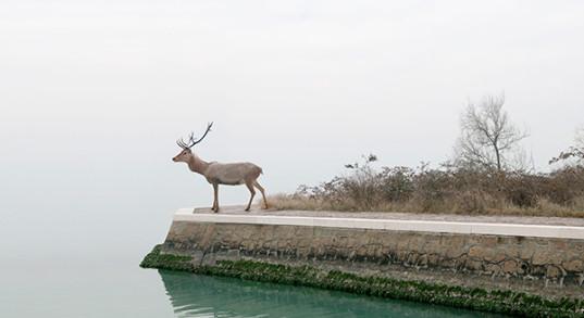 La terza Venezia (il cervo)